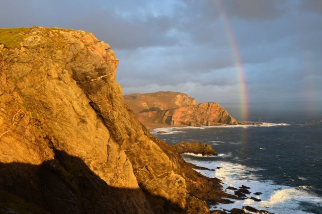 Sea cliffs on Islay, home to one of the two remaining populations in Scotland. ©Lorne Gill/SNH