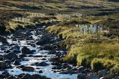 Tree planting on the Clunie Water, part of the Pearls in Peril project work. ©Lorne Gill/SNH
