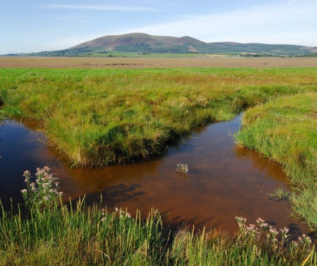 Sea-lavender, saltmash creeks and pans by the Nith Esturay. ©Lorne Gill/SNH