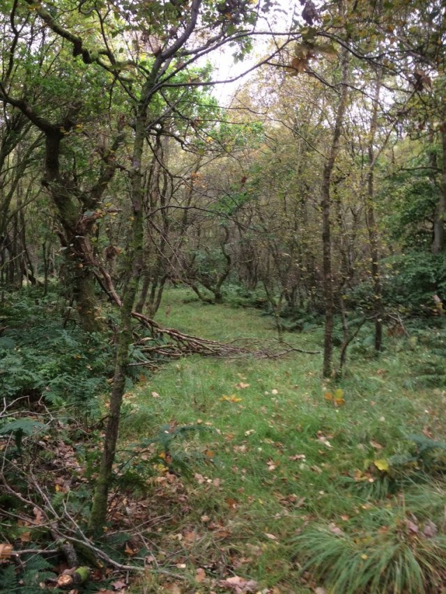 Cadder Wilderness, near Glasgow. © Jenny Greaves