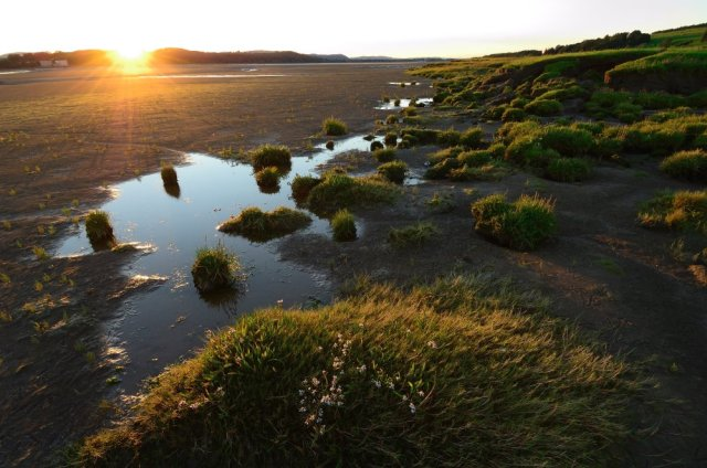 Mudflats and saltmarsh on the Nith Estuary, Caerlaverock NNR. ©Lorne Gill/SNH