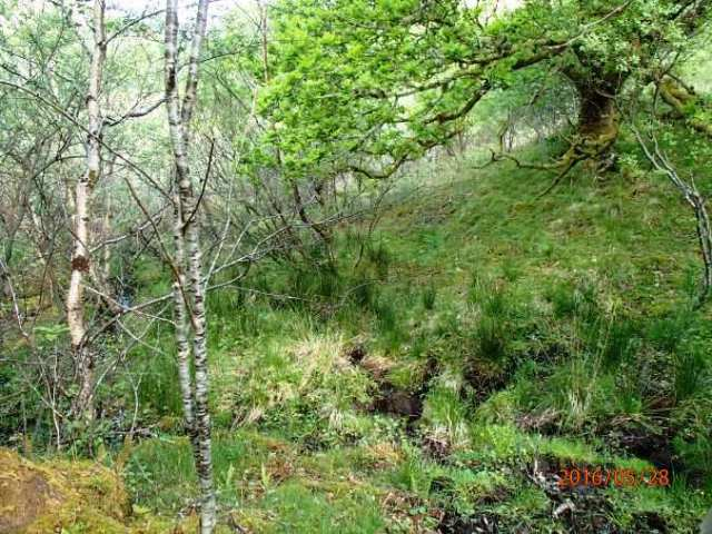 Mull woodland without flowers.