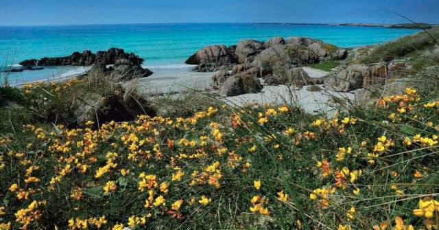 Tiree machair in bloom - a postcard from our fundraising collection. Original photo by Malcolm Steel.