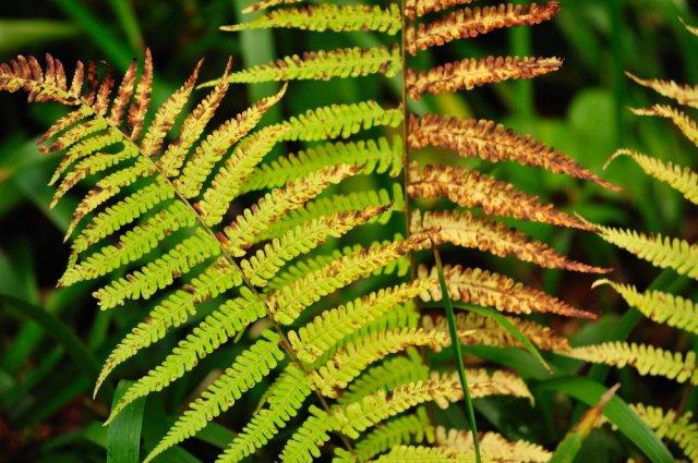 Ferns in autumn colour. ©Lorne Gill/SNH