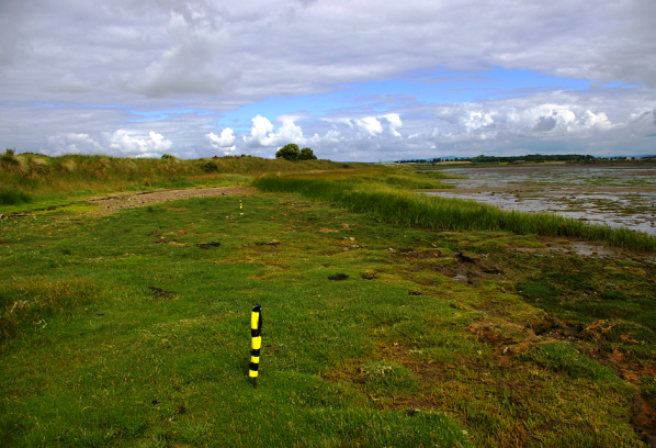A thriving linear plot of Sea Club Rush planted in 2015 rapidly expanded and the degraded saltmarsh in the foreground is now recovering.