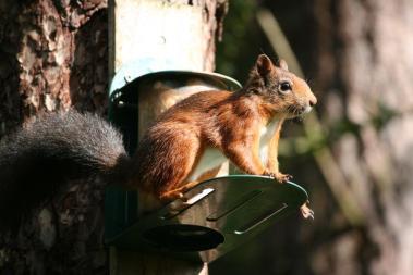 Squirrel posing. ©Steph Haworth