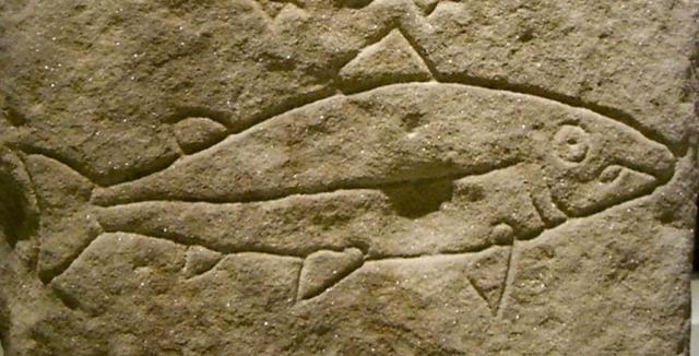 Detail of a Pictish stone carving showing a salmon, in the National Museum of Scotland. © Jessica Spengler, Creative Commons