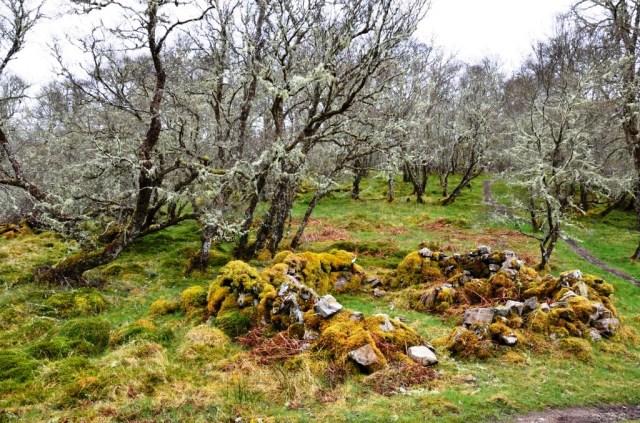 Birchwood, Loch Achiadh na h-inich, Balmacara.