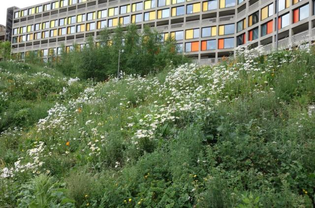 Naturalistic planting at Park Hill Flats, Sheffield – A feast for the eyes and for insects!