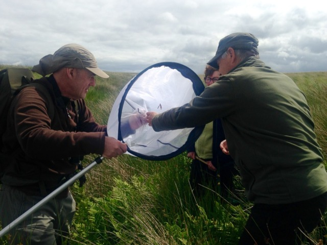 CEI volunteers taking part in a large heath survey at Airds Moss. © EACEI