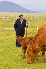 Neil Macaskill from Berneray with his Limousin cow and calf which feed on the machair sharing the habitat with breeding little terns.