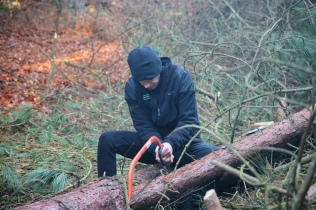 When heavy frost brought down a tree near the path I assisted the rangers and other volunteers in stripping it back.