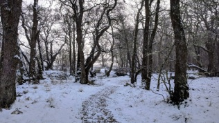 Creag Meagaidh NNR includes a range of environments including lowland heathland and woodlands. © Steven Sinclair/SNH