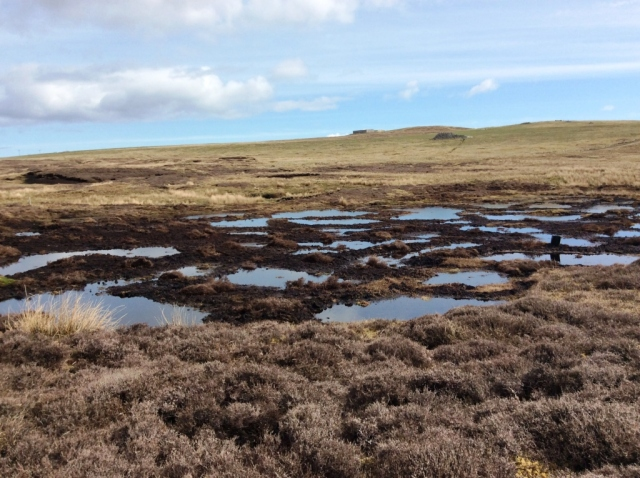 Sandy Loch. The eroding peat has been transformed into bog pools and re-planted with bog vegetation. ©Sue White/Shetland Amenity Trust.