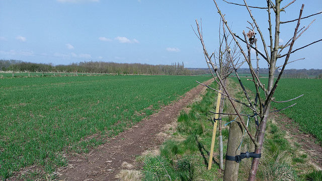 Agroforestry system with apple trees in Nottinghamshire. ©Organic Research Centre