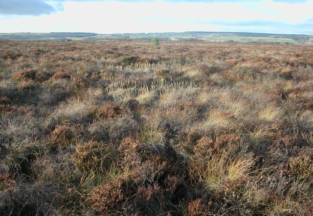 Braehead Moss SSSI and SAC