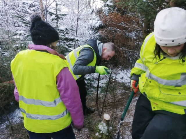 The first of the day's volunteering involved teamwork and communication to remove non-native trees from the banks of Loch Laggan. © Tom McKenna/SNH