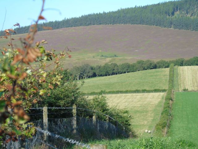 Hedges and woodland providing multiple benefits at Ruthven farm.© Jim Simmons