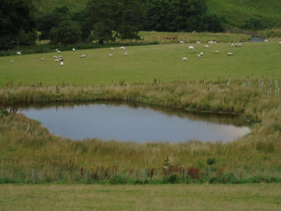 Pond excluded from stock grazing with tree planting. © Jim Simmons