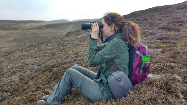 Beth Stonier (Aberdeen Uni) scanning for great skua settlement sites near Fair Isle Airstrip (Photo Glen Tyler)