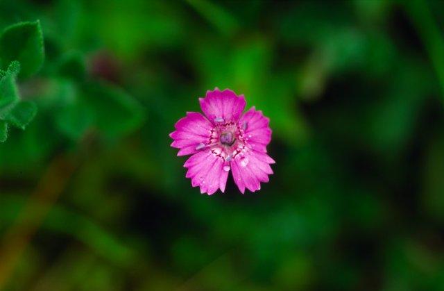 M-Pink.jpg
