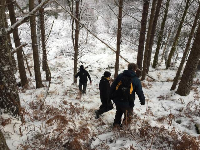 Volunteers move to a different site after carefully managing an area of forest through the practice of thinning ©George Winter/SNH