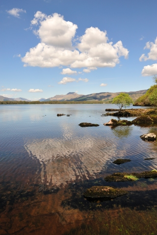 Ben Lomond and Loch Lomond from Inchcailloch NNR, Argyll and Stirling Area. ©Lorne Gill/SNH