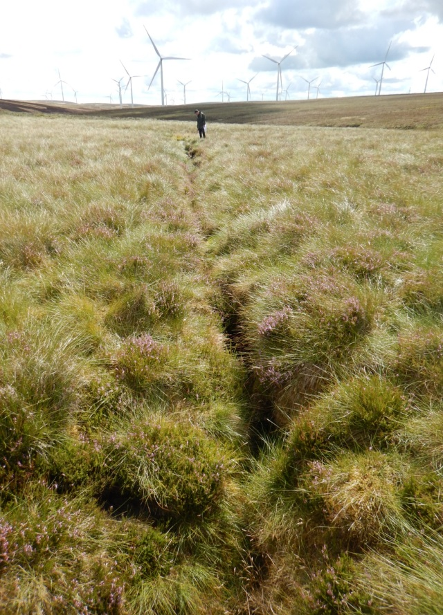 Active drain resulting in drying out peat bog ©Ewan Campbell