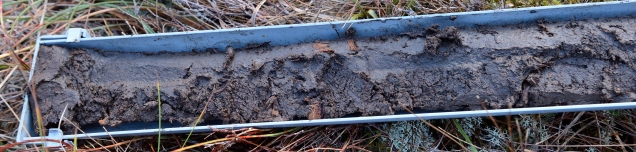 A peat core. Peat is a type of soil made up of layer upon layer of partially decomposed sphagnum mosses and other bog plants. If you look closely you can see the remains of plant material, probably the stems of cottongrass. The word for peat in Gaelic is mòine. ©Lorne Gill/SNH