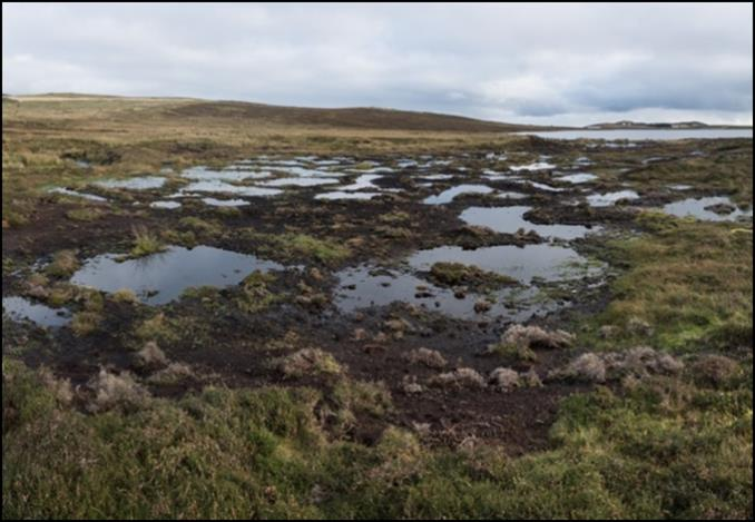 Restored area with bog pools and sphagnum reintroduced. ©Austin Taylor