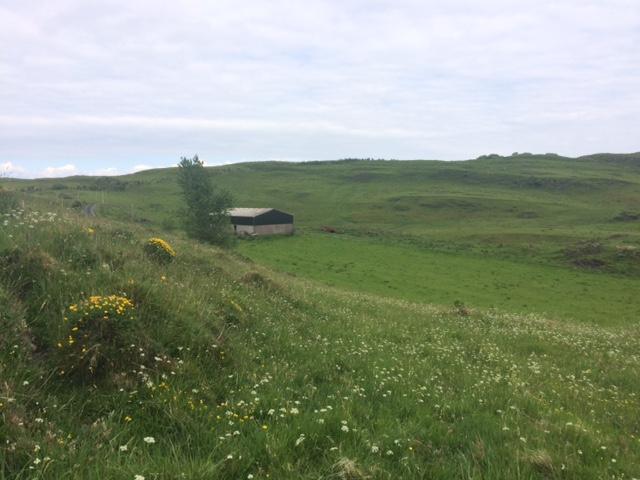 Sailean croft blog - herb rich grassland - July 2018