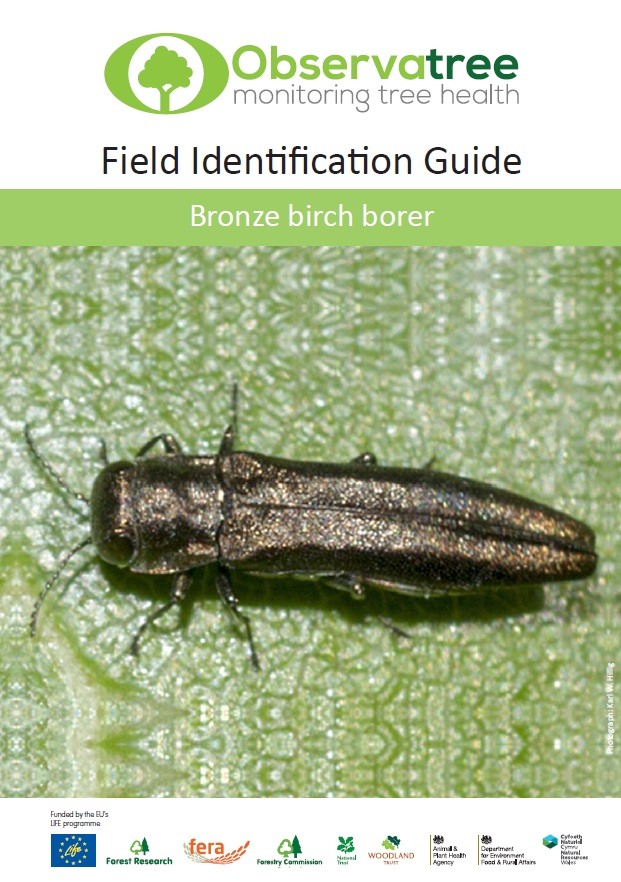 Bronze Birch Borer Field ID Guide