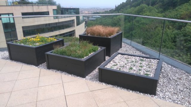 The Glenmorangie Company Ltd office Square Metre for Butterflies (c) Royal Botanic Garden Edinburgh