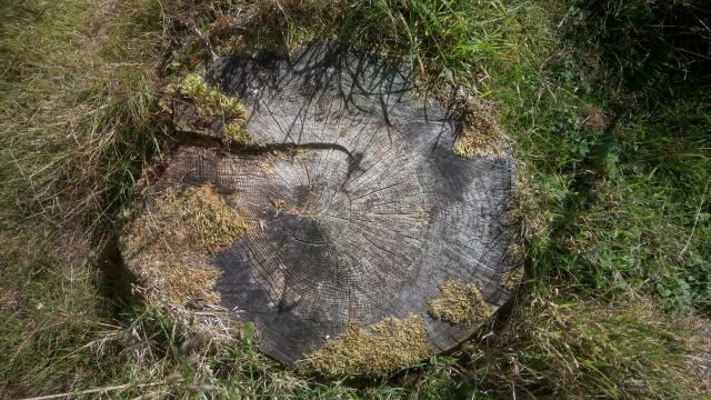 Example of rings on a tree stump, providing information on the tree's age and weather conditions throughout its lifetime (c) Kate Holl