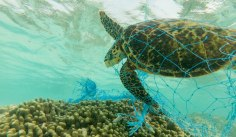 plastic-pollution-help-ocean-build-customer-loyalty
