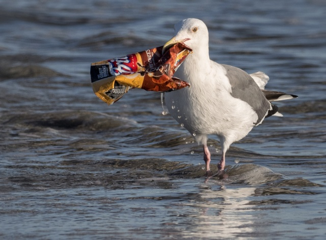 seagull-chipbag-ingridtaylar-web
