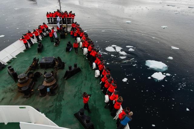HWade - Minke Whale visiting ship - Credit Oli Sansom