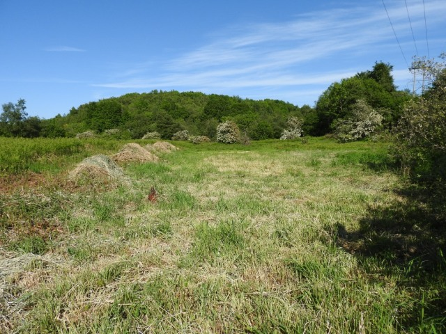 Looking east after scything (June 2018)
