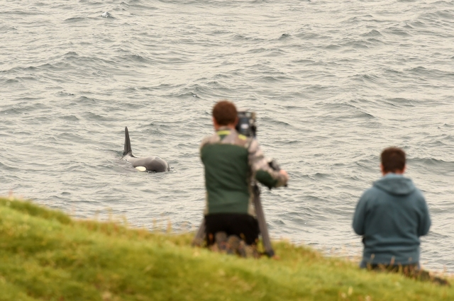 fergus and richard_filming orca ©brydon thomason