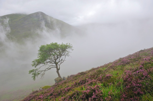 Mist rising from Coire Ardair, Creag Meagaidh NNR on a typically wet summers day 2008. East Highland Area. ©Lorne Gill/SNH