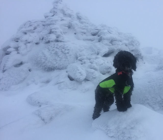 Tilly on a snowy adventure day Graham Boyle
