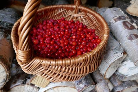 berries - rowan