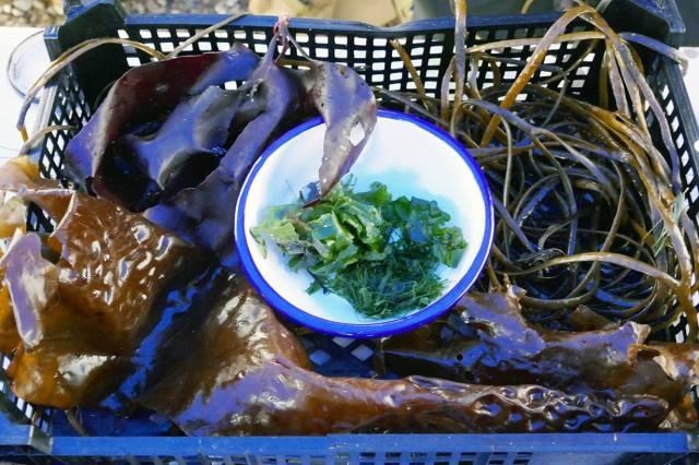 Loch Fleet seaweed
