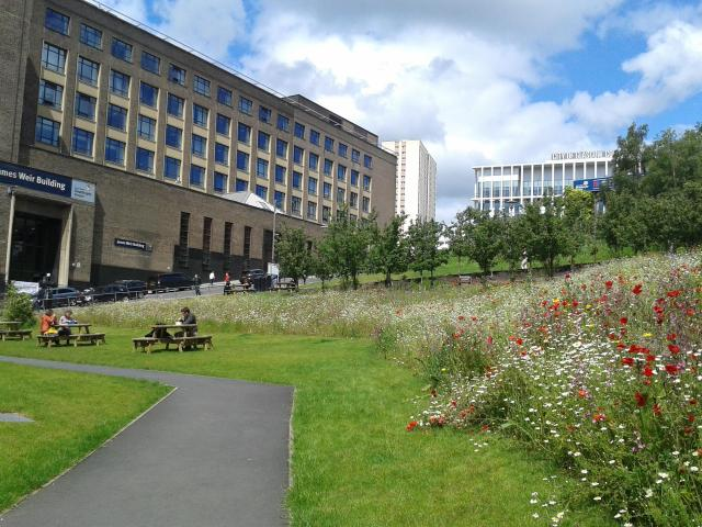 Green infrastructure at Strathclyde University_JPEG Image Original Size_m183822