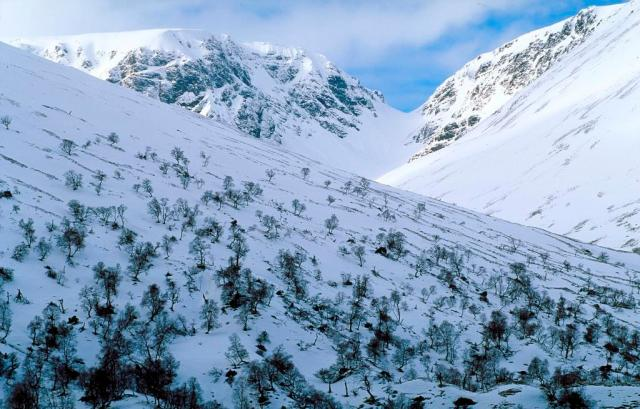 Native Birch woodland in winter Creag Meagaidh NNR ©Lorne Gill