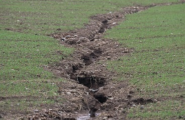 Soil erosion in a cultivated gley soil - Lorne Gill, SNH.