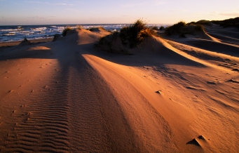 Evening light on the snd dunes at Sands of Forvie NNR, Grampian Area. ©Lorne Gill