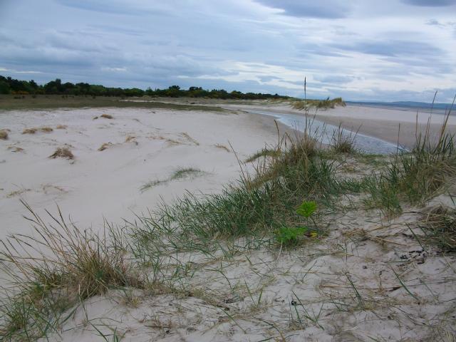 Sand dunes and saltmarsh_ Nairn_ 16 May 2014_m145704