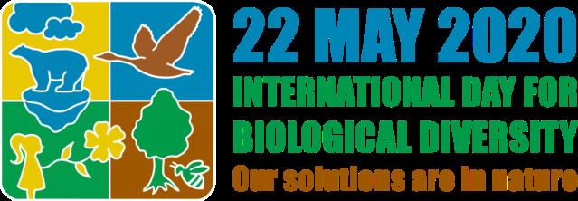 idb-2020-logo-en-web_4
