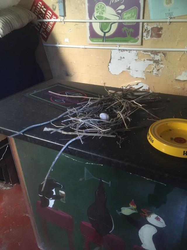 Pigeon nest (David Steel)
